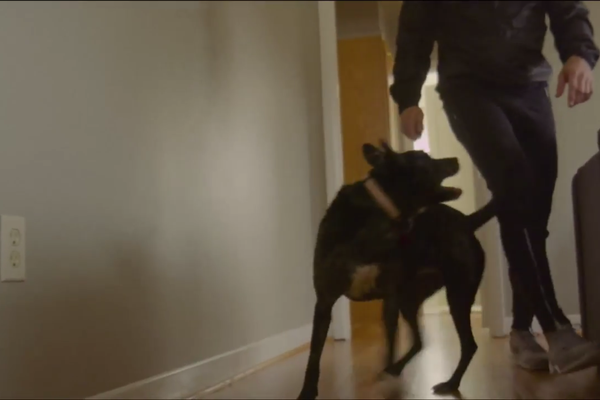 A still shot of the rescue dog Layla and Actor Phillip Rainford